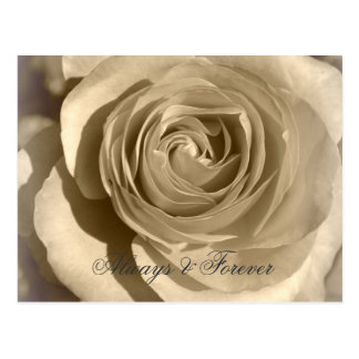 Cream Rose Forever and Always Post Card