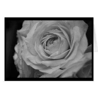 Cream Rose in Black & White Card