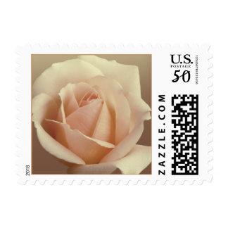 Cream Rose Postage