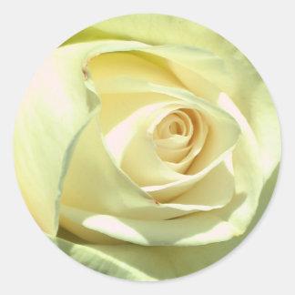 Cream Rose Sticker