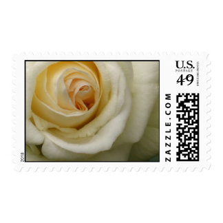 Cream Rose U.S. Postage Stamp
