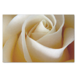 Cream Rose Wedding Photo Tissue Paper