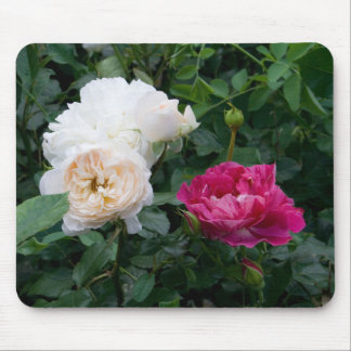 Cream Roses and Pink Streaked Roses Mousepad