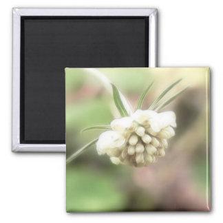 Cream Scabiosa Magnet