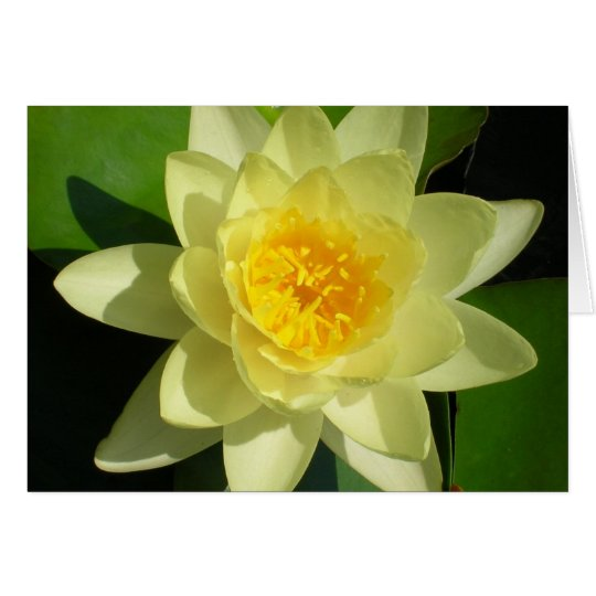 Cream Water Lily Card