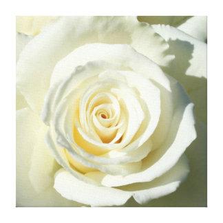 Cream White Rose - Canvas