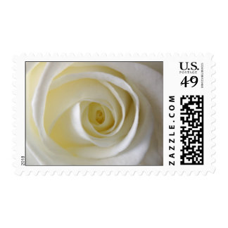 Cream White Rose Wedding Postage Stamp