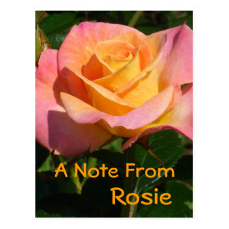 """Creamsicle"" Orange Rose Postcard"