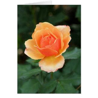 Creamy Orange Modern Rose Card