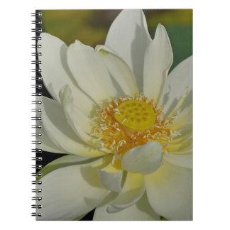 Creamy Water Lily.JPG Spiral Notebook