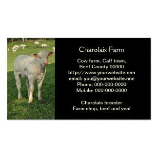 Creamy white charolais calf photo business card