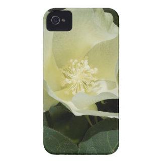 Creamy White Cotton Plant Blossom Case-Mate iPhone 4 Case