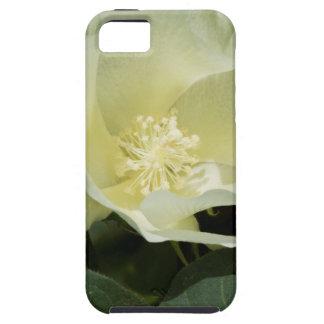 Creamy White Cotton Plant Blossom iPhone SE/5/5s Case