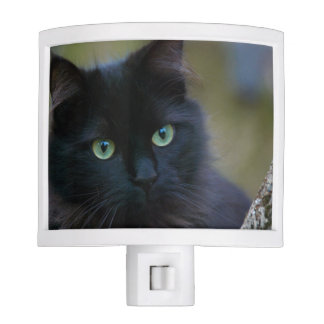 Create your own pet photo night lites