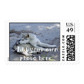 Create your Own Pet Photo Postage