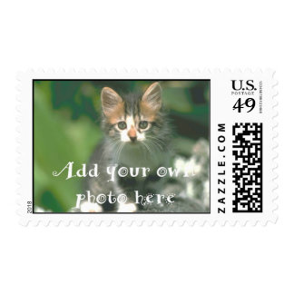 Create your Own Pet Photo Postage Stamp