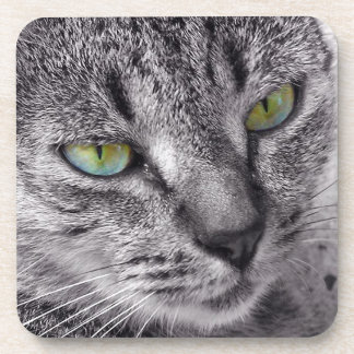 Create your own Tabby cat drink coaster set