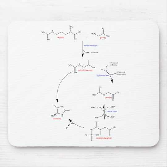 Creatine synthesis mouse pad