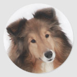 Creation of Shelties Stickers