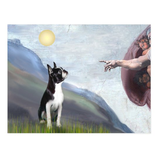 Creation of the Boston Terrier (#3) Postcard
