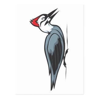 Creative Ivory Billed Woodpecker Postcard