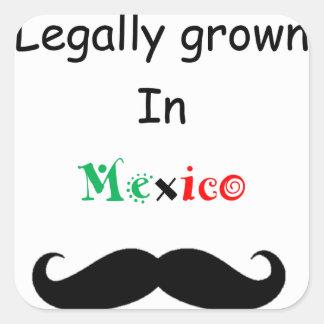 Crecido legalmente pegatina cuadrada