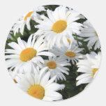 Crecimiento de flores de la margarita blanco etiquetas redondas