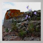 Crecimiento de flores en roca poster