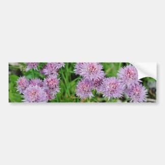 Crecimiento de flores púrpura de la dalia etiqueta de parachoque