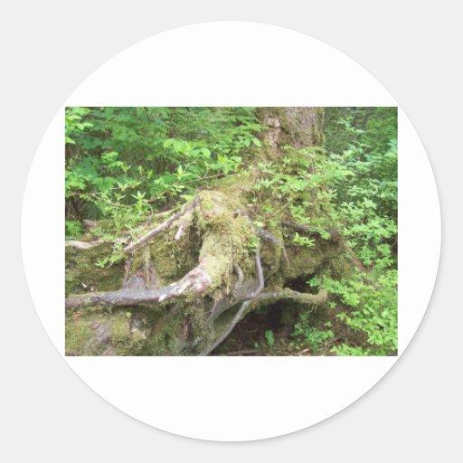 Crecimiento del árbol forestal pegatina redonda