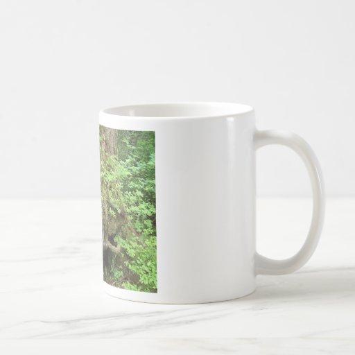 Crecimiento del árbol forestal taza clásica