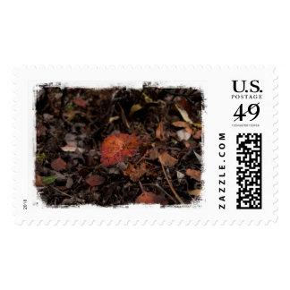 Crecimiento del otoño del AG Timbres Postales