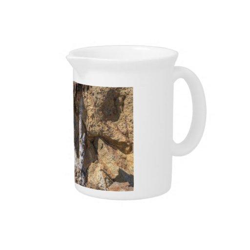 Crecimiento suculento a través de rocas jarra de beber