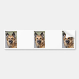 Cree su propia foto del mascota etiqueta de parachoque