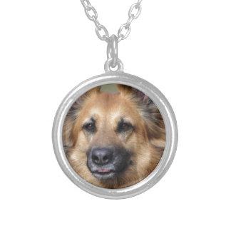 Cree su propia foto del mascota collar plateado