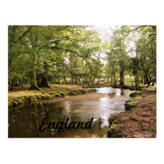 Creek in New Forest Postcard