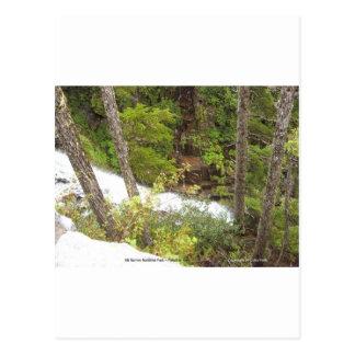 Creek Waterfalls Nature Photo Mt Rainier Nat Park Post Card