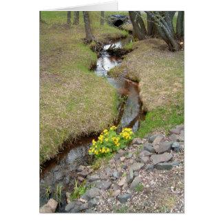 Creekside Dally Card