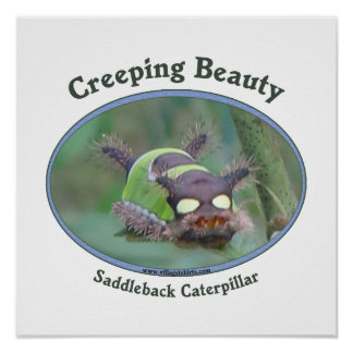 Creeping Beauty Poster