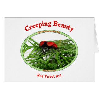 Creeping Beauty Red Velvet Ant Bug Greeting Card