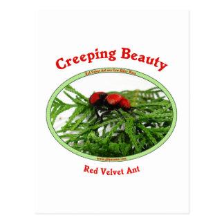 Creeping Beauty Red Velvet Ant Bug Postcards
