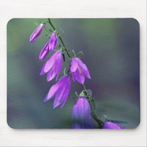 Creeping bellflower. flowers mousepad