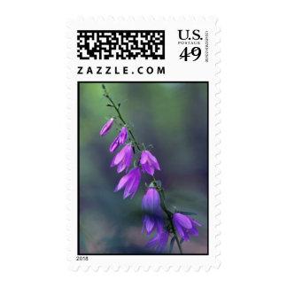 Creeping bellflower. flowers stamp