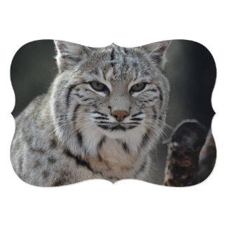 Creeping Bobcat Card