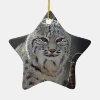 Creeping Bobcat Ceramic Ornament