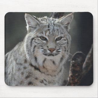 Creeping Bobcat Mouse Pad