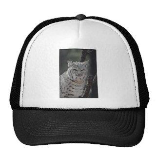 Creeping Bobcat Trucker Hat