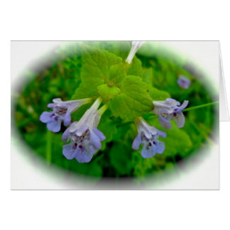 Creeping Charlie Ground Ivy Note Card
