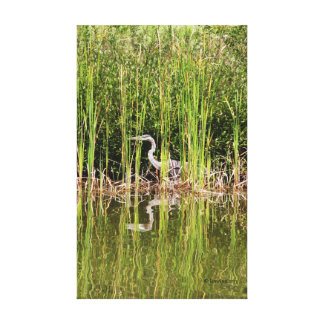 Creeping Heron 1 Stretched Canvas Print