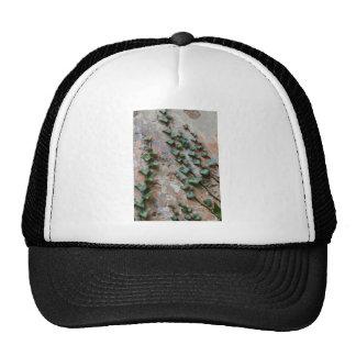 Creeping Ivy Hats